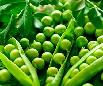 Los guisantes aportan unos 18g/100g de fibra y las habas, además de ser también fuente de fibra, son ricas en proteina vegetal